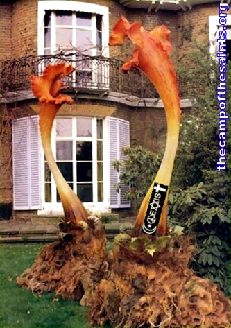 Triffids-Two-001x