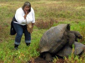 Turtle-Hump-001